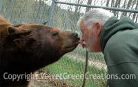 Oswald's Bear Ranch of Newberry, MI is the largest bear only ranch in the Upper Peninsula.